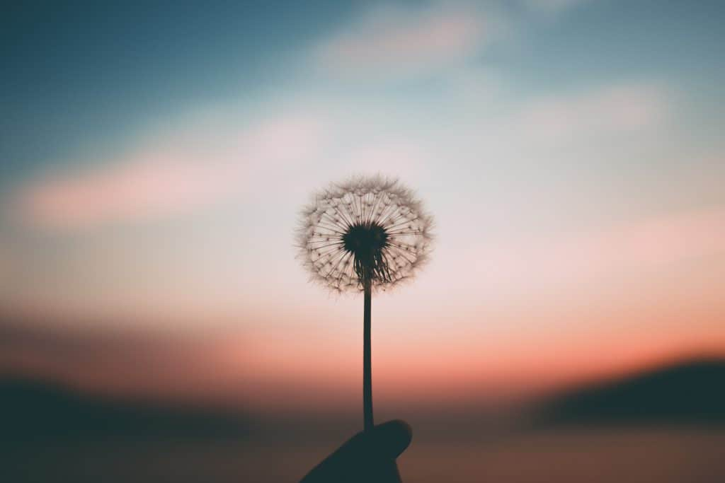 Dandelion in front of the sunset - How to let go. Life lessons I wish I knew earlier in life.