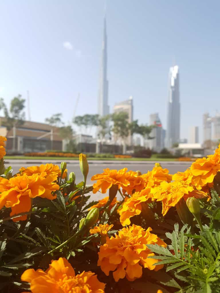 Downtown Dubai - Things to do in Dubai