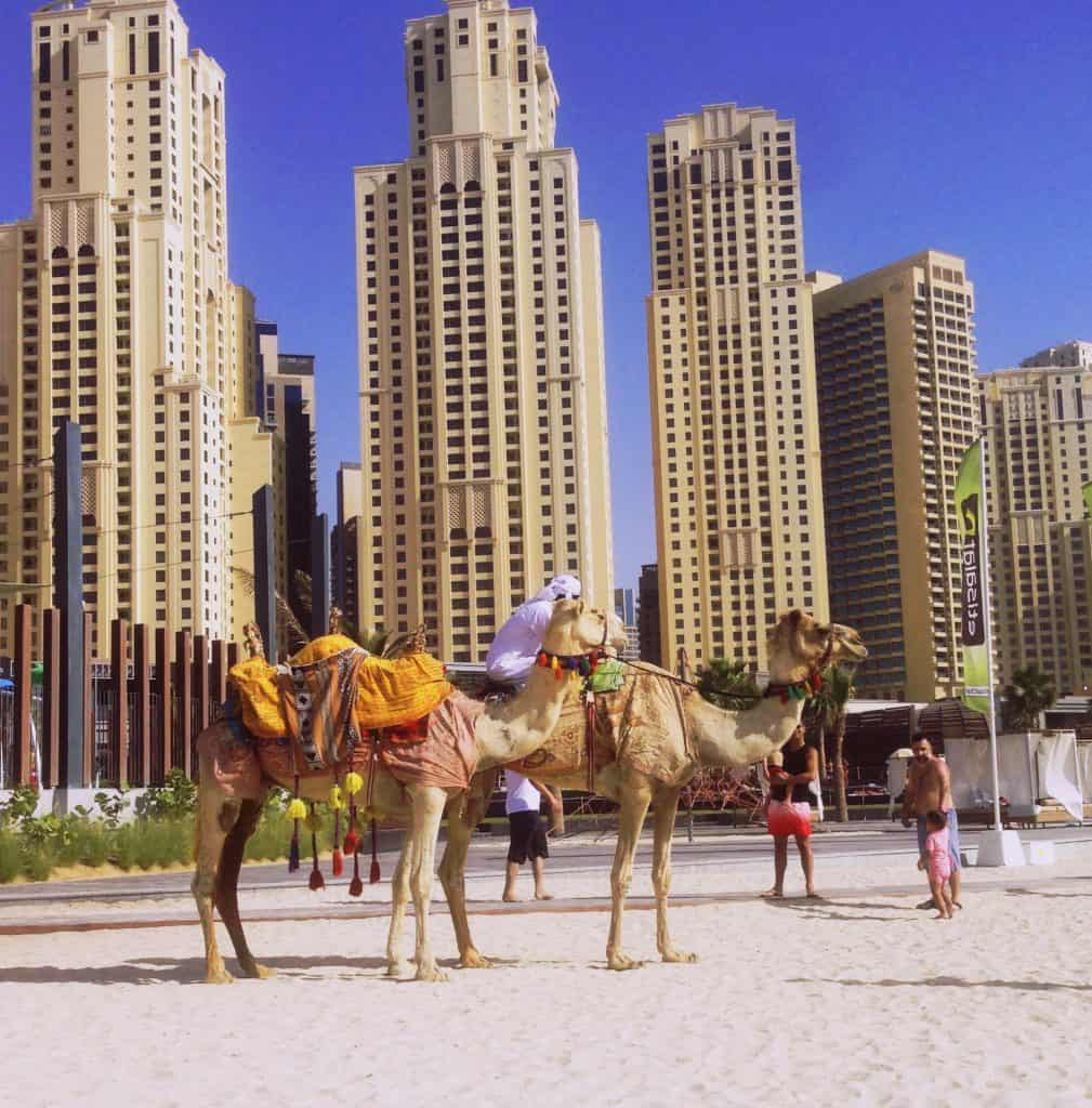 JBR Dubai with Camels - Things to do in Dubai